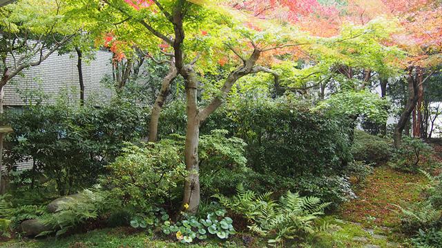 聖徳茶室の庭