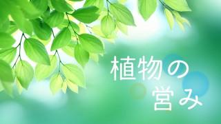 最近気になるシリーズ~植物の営みなど~